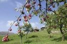 Sela u blizini Sjenice